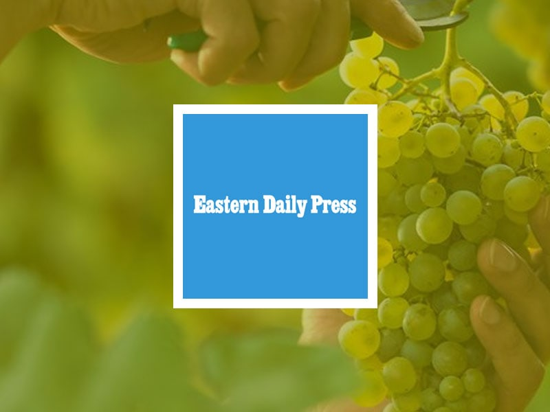 Eastern Daily Press logo placed over an image of someone cutting off a green grape vine.