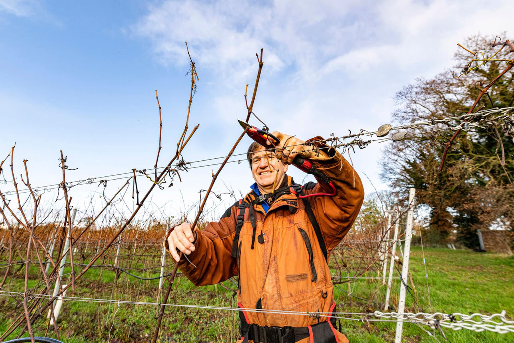 A picture of one of the Chet Valley Vineyard owners cutting twigs in the vineyard.